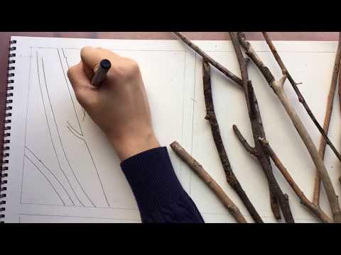 Architectural Design : Line & Shape Studies