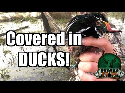 EPIC Wood Duck Hunt | 45 Minute Limit!!!