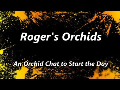 An Orchid Chat To Start The Day