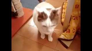 猫の種類教えてください!? コメントに記入お願いします\ (^^)/ ↓参...