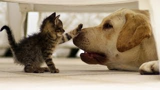 Cute is Not Enough - Funny Cats and Dogs Compilation #97