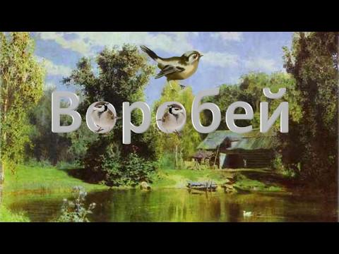 """И. Тургенев """"Воробей"""" thumbnail"""