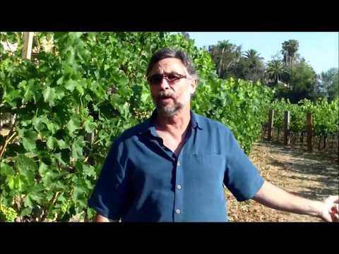 Rupert Murdoch Moraga Vineyards, Bel Air, Tour with winemaker Scott Rich