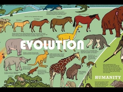 evolution of life on earth A pivotal step in the evolution of life on earth was the progression from unicellular  to multicellular organisms this in turn required development.