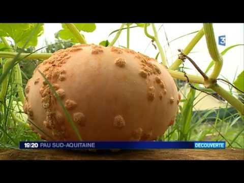 Le conservatoire des légumes anciens d'Assat: à la découverte de variétés oubliées