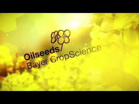 Oilseeds by Bayer CropScience