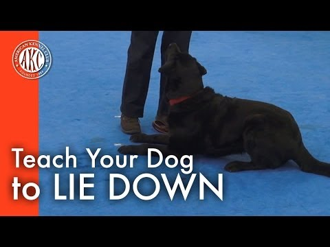 Teach Your Dog to Lie Down
