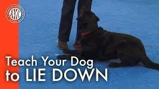 Teach Your Dog To Lie Down