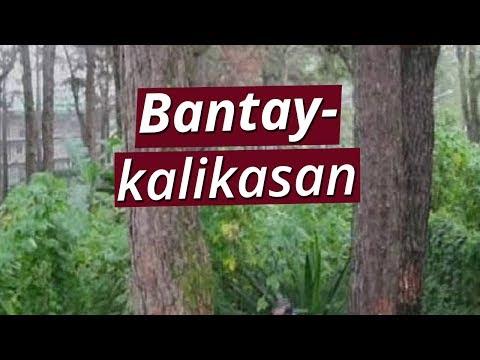 SONA: Unti-unting pagpatay sa 45 pine trees sa pamamagitan ng salt solution, nabisto