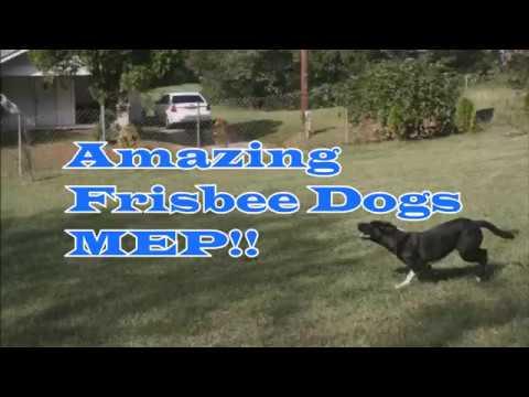 AMAZING FRISBEE DOGS- FULL MEP