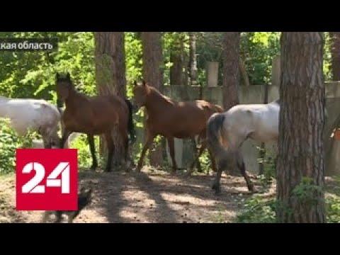 Одни скелеты: лошадей загнали в бомбоубежище