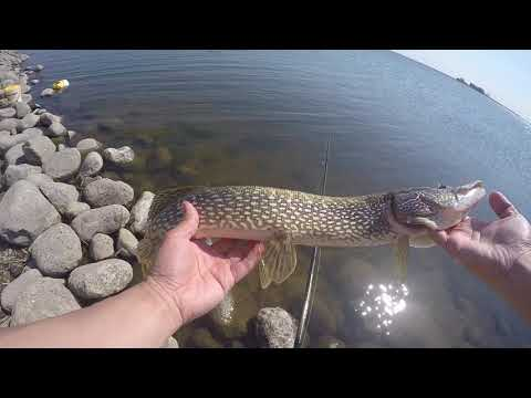 My First Time To North Dakota! | Awesome Fishing!