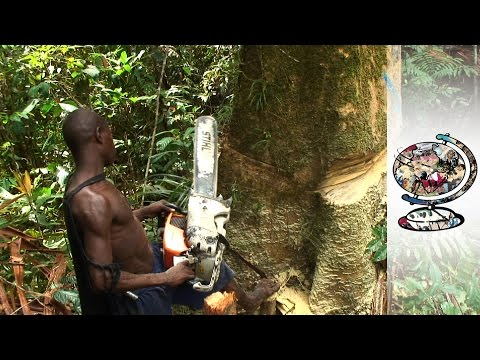 Indigenous People Under Threat From Deforestation