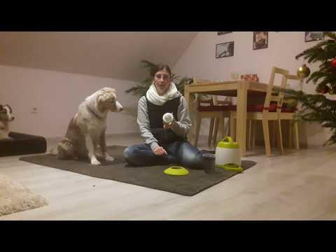 Produkttest: Trixie Memory Trainer | Strategiespiel | Hund lernt Buzzer drücken mit Futterautomat