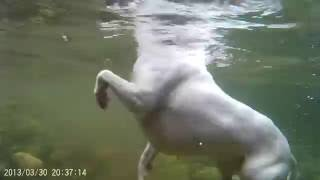 GoPro View DOGS swimming , Under water view