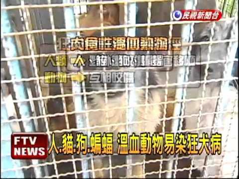 絕跡50年 台灣再成狂犬病疫區-民視新聞