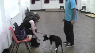 Four Feet on the Floor: Jumping Up Behaviour in Dogs and Puppies