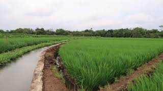 Beautiful Rice field terraces in Vietnam