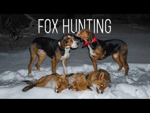 NH: Kettujahtia Ajokoirilla | Fox Hunting With Hounds | 2018