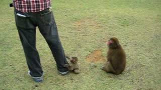 Iwatayama monkey park, arashiyama, Kyoto, japan
