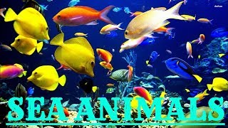 Новый английский мультфильм для малышей.Английский для малышей морские животные-sea animals.