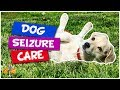 What to Do When Your Dog has a Seizure