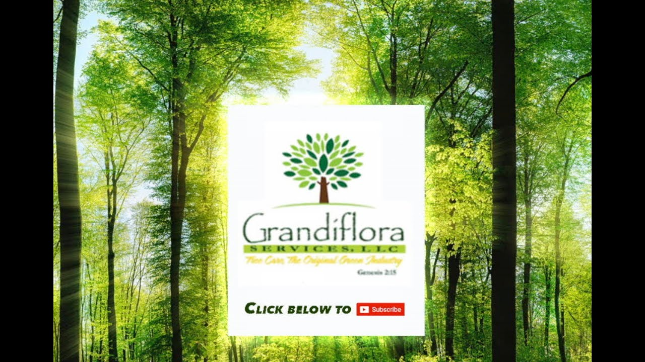 Tree Care The Woodlands Jan 2016 Grandiflora Services