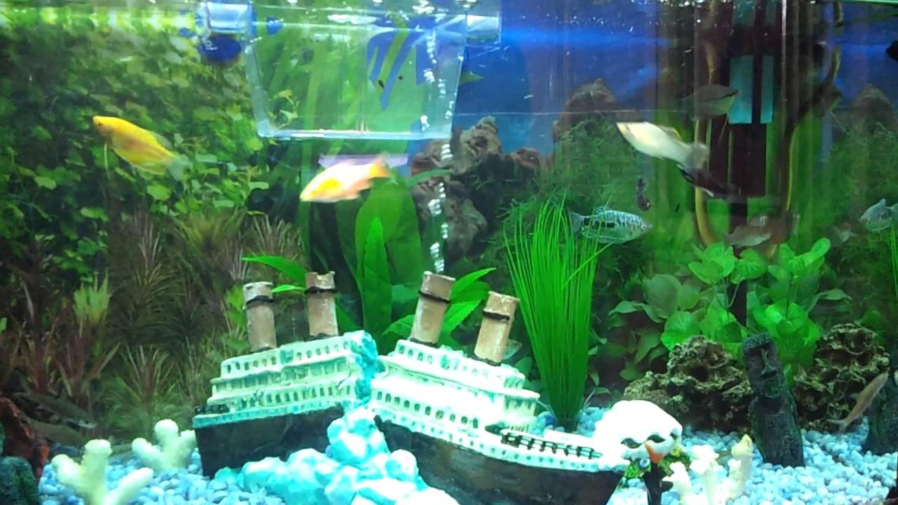Serpente acquario acqua dolce youtube for Acqua acquario