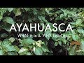 My AYAHUASCA Diary: What it is & WHY I did it | PART 1