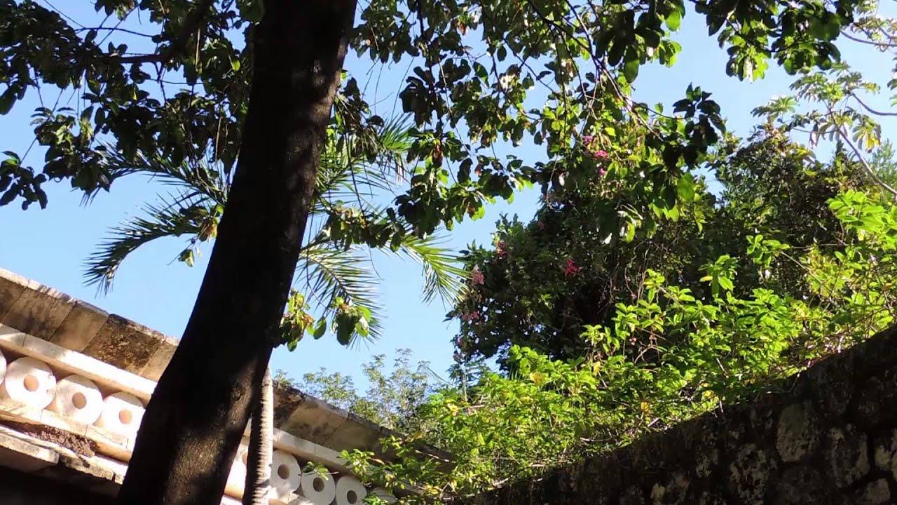 3655 ramas y hojas de un rbol moviendose con el viento - Ramas de arboles ...