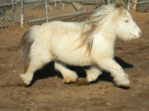Pony Horse Miniature Size Available In Different Colors