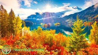 Good Morning Music 528Hz  Morning Music With Free Positive Energy  Morning Meditation Music