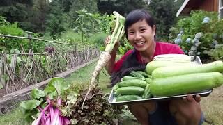 Thu hoạch bầu, bí, dưa leo, củ cải trắng, CẢI MỸ, XÀ LÁCH ĐỎ, VƯỜN NHÀ