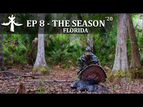 OSCEOLA TURKEY HUNT PUBLIC LAND AFTERNOON STYLE Episode 8