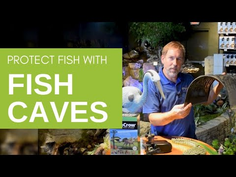 Fish Caves: A Way To Stop Birds From Eating Your Fish