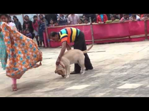 Barrackpore dog show dona 2015