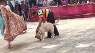 Barrackpore dog show dona 2015