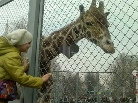 Московский Зоопарк: Информация, новости, фото, часы работы