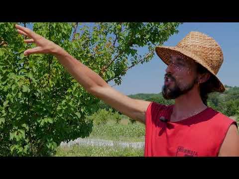 Visite du verger-maraîcher de la ferme Brin de Terre