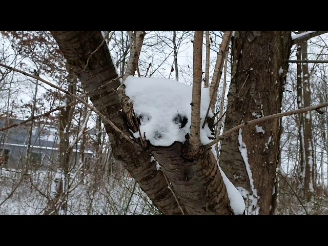 Hvor katten er missen ❤ Mette