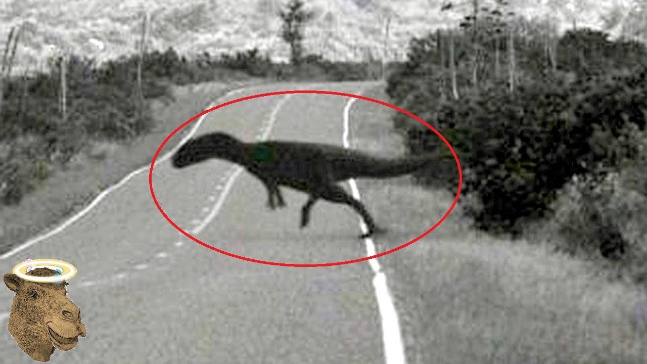 5 Dinosaurios Captados En Cámara Y Vistos En La Vida Real ...