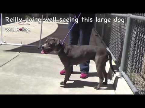 Save Riley! Female 4 yr. Shelter Dog