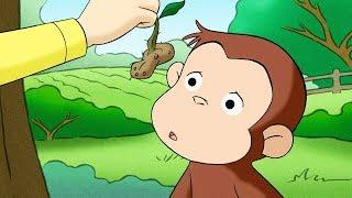 Georges le Petit Singe 🐵Écureuil D'un Jour 🐵Saison 1 🐵Dessins Animés 🐵Animation Pour Enfants