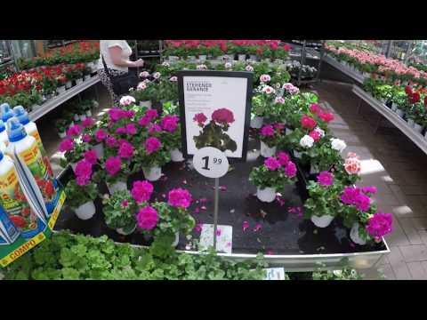 Цветочный магазин - рай для садовников. Германия.