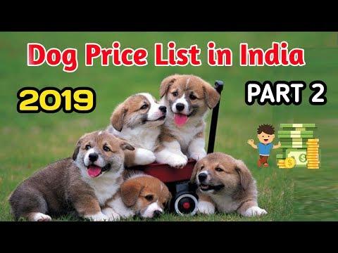 Dog Price List in India 2019 / PART-2 / DOG PRICE LIST