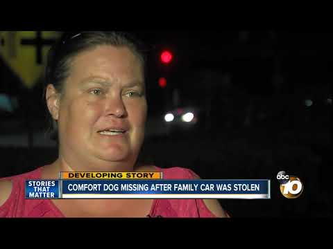MORNING NEWS - Comfort Dog Missing After Family's Car Was Stolen