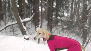 出掛けた里山は、吹雪の中でした(^_^;) こんな日に里山トレッキングに出...