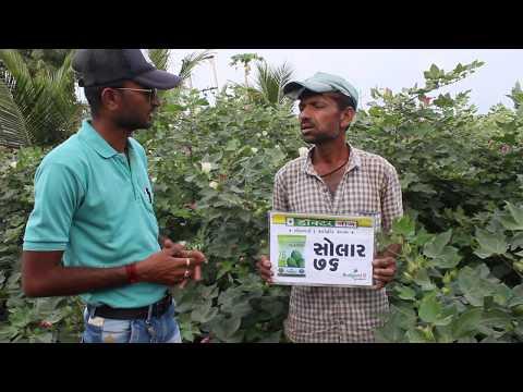 SOLAR 76 BGII - FARMER: RATHOD MUKESHBHAI, GHANTIYA, JND