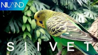 Niland - Siivet [Official Lyric Video]