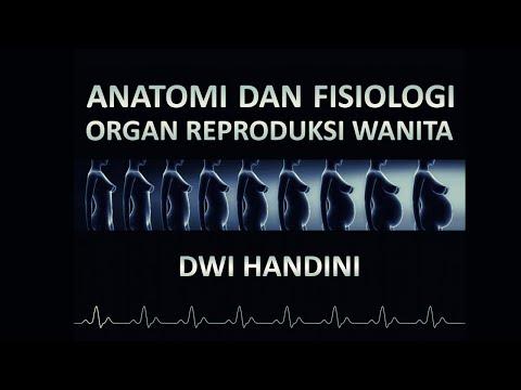 Anatomi dan Fisiologi Organ Reproduksi Wanita